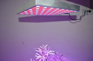 Upgrade 225LED AC85~265V 45W Tissue Culture Grow Panel Light pictures & photos
