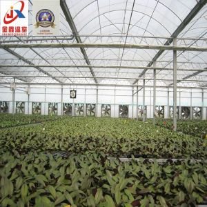 Vegetable Planting Plastic Tunnel Greenhouse pictures & photos