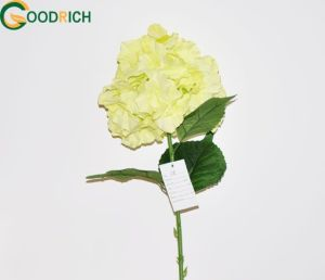 High Quality Sing Stem Hydrangea Flower pictures & photos