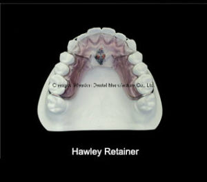 Hawley Retainer Orthodontic pictures & photos
