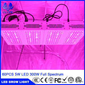 Hot Sell Best Quality Hydroponic Full Spectrum 300W LED Grow Light pictures & photos