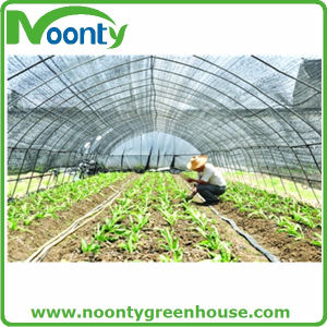 Vertical Wind Tunnel Green House for Commercial pictures & photos
