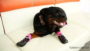 Design Printing PVC Anti Skid Stain Resistant Sports Pet Socks pictures & photos