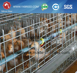 High Quality Chicken Cage China Supplier pictures & photos