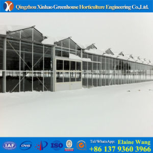 Manufacturer Directly Sale PC Glass Greenhouse for Angriculture pictures & photos