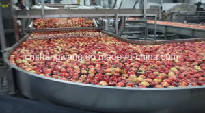 High Quality Apple Processing Machine/Line pictures & photos