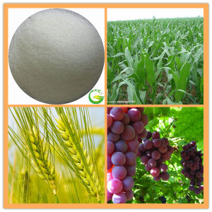 EDTA Calcium Fertilizer/EDTA pictures & photos