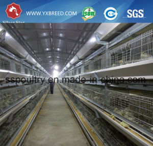 Layer Chicken Cage of Poultry Equipment pictures & photos