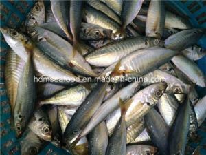 Bqf Frozen Seafood Horse Mackerel Fish pictures & photos