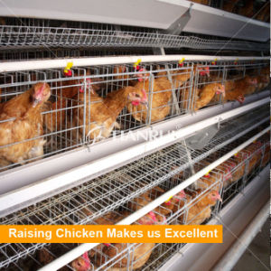 Raise hens with automatic equipment layer chicken cage A type pictures & photos