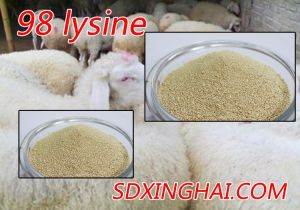 Factory Price of Lysine in Feed Grade for Animals