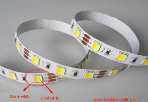 Warm White and Daywhite Dual White in One SMD5050 LED Strip pictures & photos