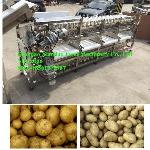 Potato Sorting Machine/Garlic Grading Machine/ Onion Sorting Machine pictures & photos