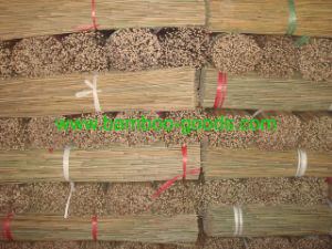 Natural Green Tonkin Bamboo Cane pictures & photos