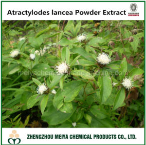 Tcm Atractylodes Lancea Powder Extract Supplied by Manufacturer pictures & photos