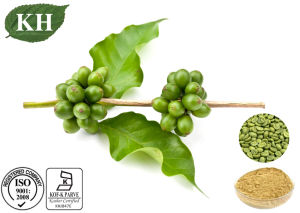 High Quality Green Coffee Bean Extract Total Chlorogenic Acid pictures & photos