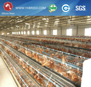 Kenya Poultry Farm Layer Chicken Cage (A4L160) pictures & photos