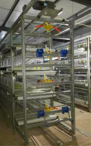 Full Automatic Small Chick Cage for Poultry Farm (H Type Frame) pictures & photos