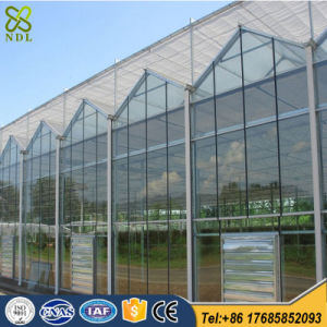 Multi-Span Commercial Glass Greenhouse for Vegetables pictures & photos