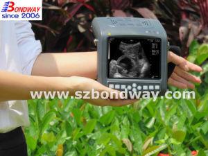 Pig Ultrasound Imaging Machine