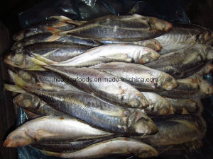 IQF Horse Mackerel Fish pictures & photos