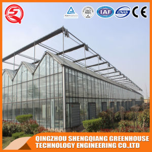China Venlo Vegetable/Garden Tempered Glass Greenhouse pictures & photos