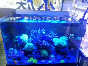 Dimmable 72W 30cm Coral Reef Used LED Aquarium Light Blue and White pictures & photos
