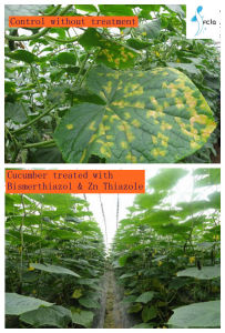 Hot Production High Effective Against Bacterial Disease Fungicide pictures & photos