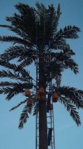 Palm Tree Camouflage Steel Tower