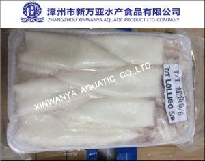 Frozen Squid (Loligo Chinensis)
