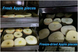 High Quality Food Vacuum Freeze Dryer pictures & photos