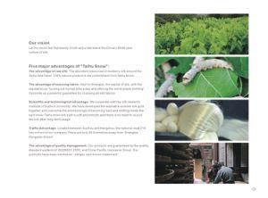 Taihu Snow Silk Luxury Yarn Dyed Jacquard Silk Bedding Set pictures & photos