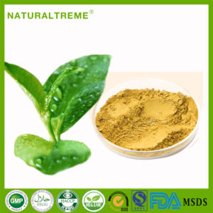 Health Food Material Matcha Green Tea Extract pictures & photos