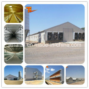 Customized Low Cost Steel Structure Poultry House