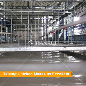 Automatic Poultry Equipment for Broiler Raising H type all autos pictures & photos