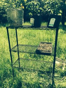 Adjustable 4 Layers Black Carbon Steel Wire Shelf for Mushroom Growing Rack pictures & photos