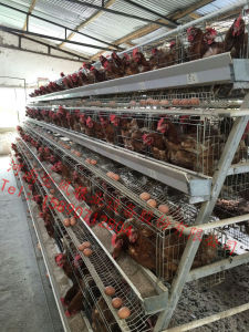 Auto Feeding System Chicken Laying Cage/Full Automated Poultry Battery Cages pictures & photos
