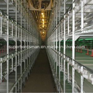 Hot Sale Poultry Equipment Chicken Cage Feeding System pictures & photos