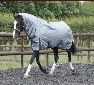 1200d, 1680d Poly, 1680nylon Winter Horse Rug, Turnout Rug, Horse Rug, Horse, Horse Product, Horse Riding (CB-30) pictures & photos