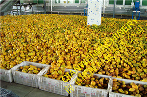Mango Juice Plant pictures & photos