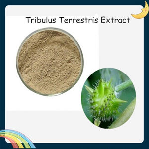 Tribulus Terrestris Extract Saponins pictures & photos