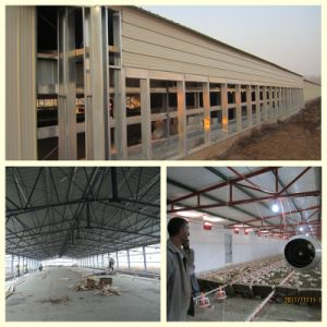 Light Steel Material Poultry House with Equipments pictures & photos