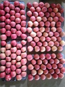 Well Selling Red Fresh FUJI Apple pictures & photos