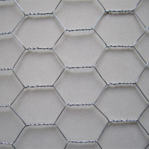Hot-DIP Galvanized Chicken Wire Netting China Supplier pictures & photos