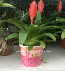 Burgeoning New Style Paper Plant Container pictures & photos