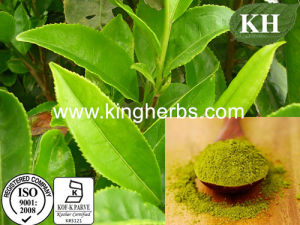 Polyphenols 95%, Catechins 80%, EGCG 50% Green Tea Extract pictures & photos