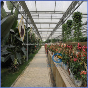 Production/Experiment /Commercial Large Small Three Layers PC Sheet for Greenhouse pictures & photos