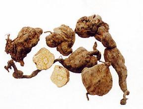 Pure Fo-Ti Extract, Fleece-Flower Root Extract 10: 1 pictures & photos