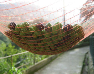 PE Material Manufacture Direct Supplier Olive Net with 12 Mesh pictures & photos