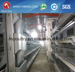 Hot Galvanized Farming Cage (A-3L90) pictures & photos